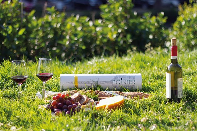 pointer picnic